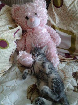 МОЙ котик зовут КЕкс